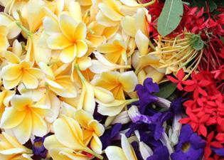 チャナン用の花の画像
