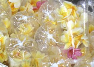 南国の花『プルメリア』の画像